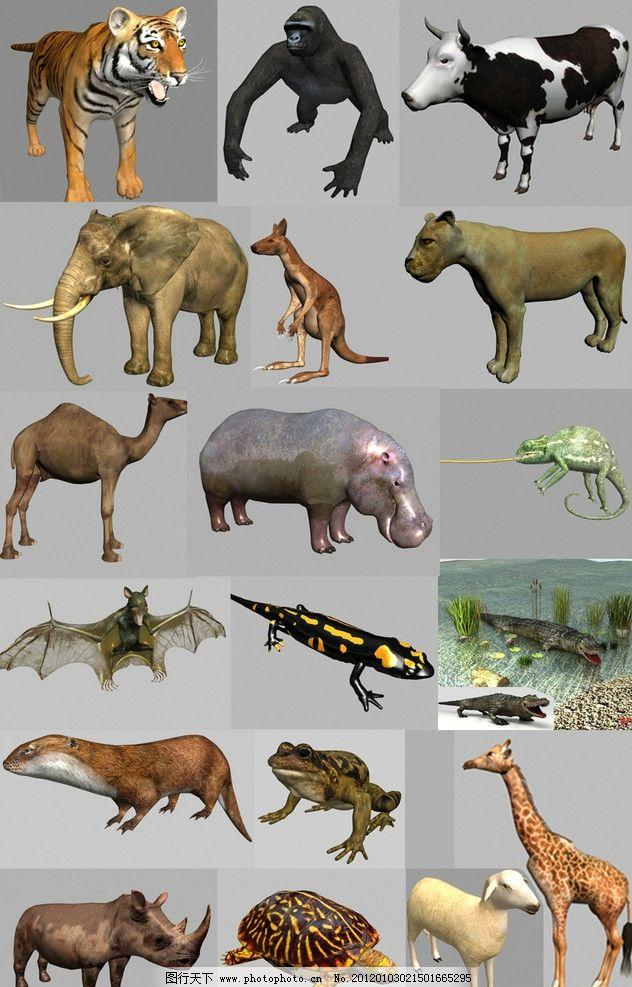 动物max模型(带贴图)