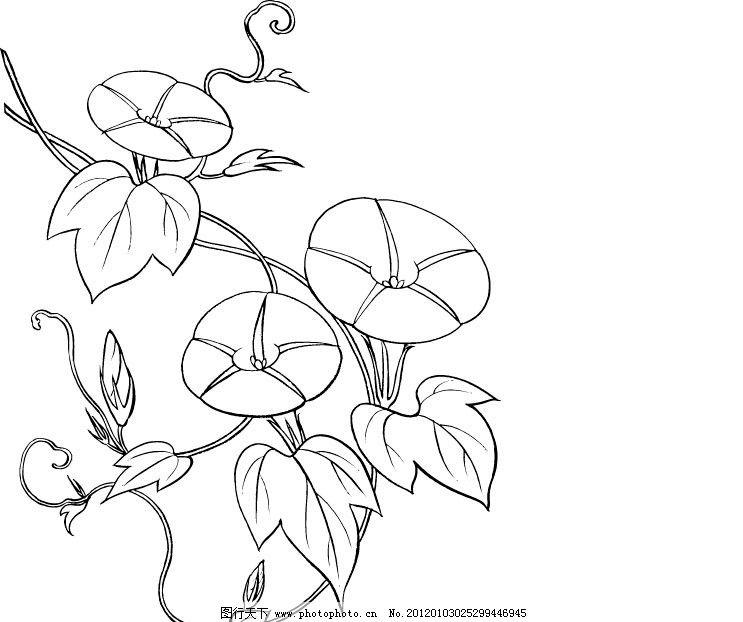 牵牛花矢量图 花草矢量图 装饰图案 纹样 抽象植物 绣花刻画 矢量植物