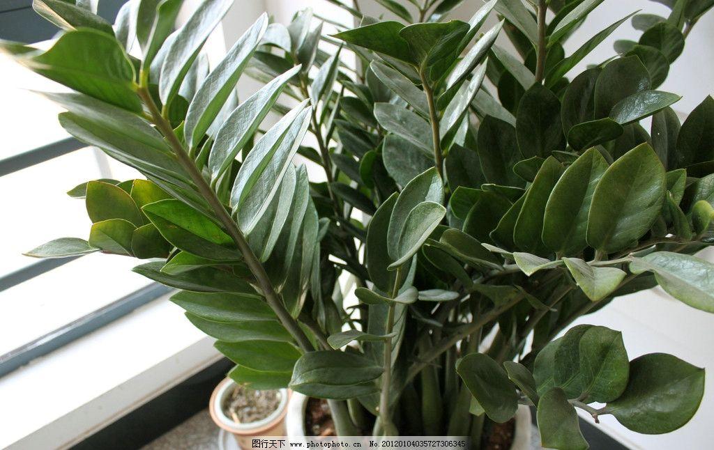 盆栽 办公室 绿色植物 花花草草 花草 生物世界 摄影 72dpi jpg
