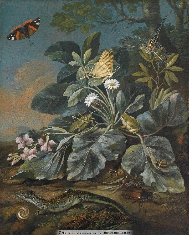 植物与动物图片