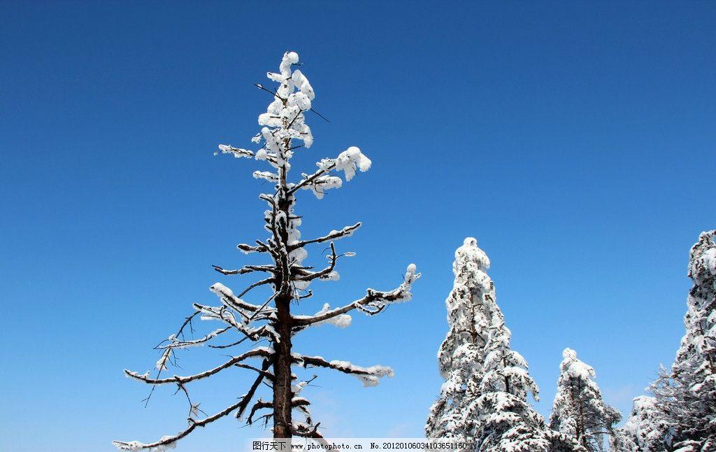峨眉山雪景 雪景图片,峨眉山风景 山水风景 天空 树林