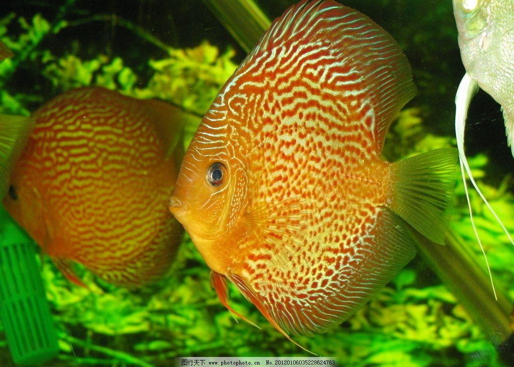 壁纸 动物 水果 鱼 鱼类 植物 1024_731