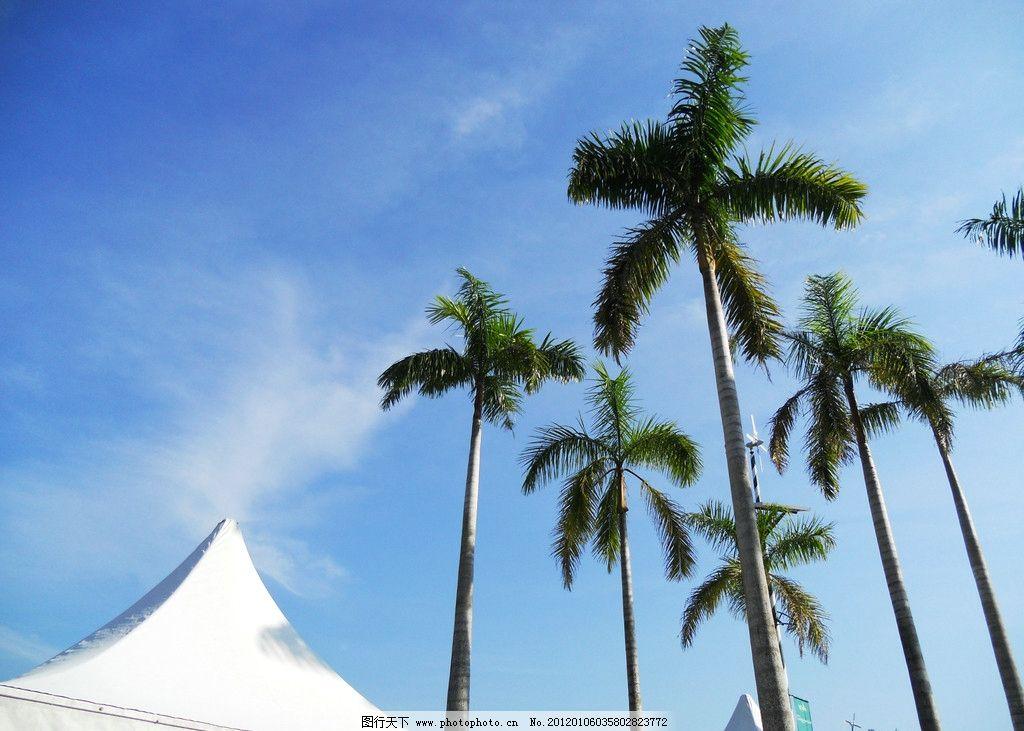 椰子树 海南 天空 旅游摄影 槟榔树 树木树叶 生物世界 摄影 300dpi