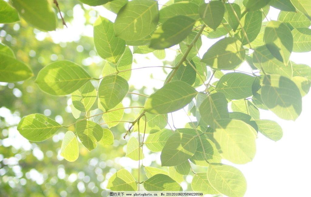 树木 秋天 装饰图案 树叶 树枝 叶子 植物 枝叶 绿叶 茂叶 树木树叶