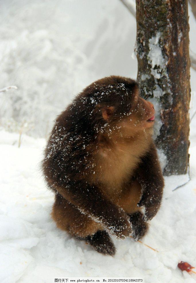 猴子 峨眉山 动物图片