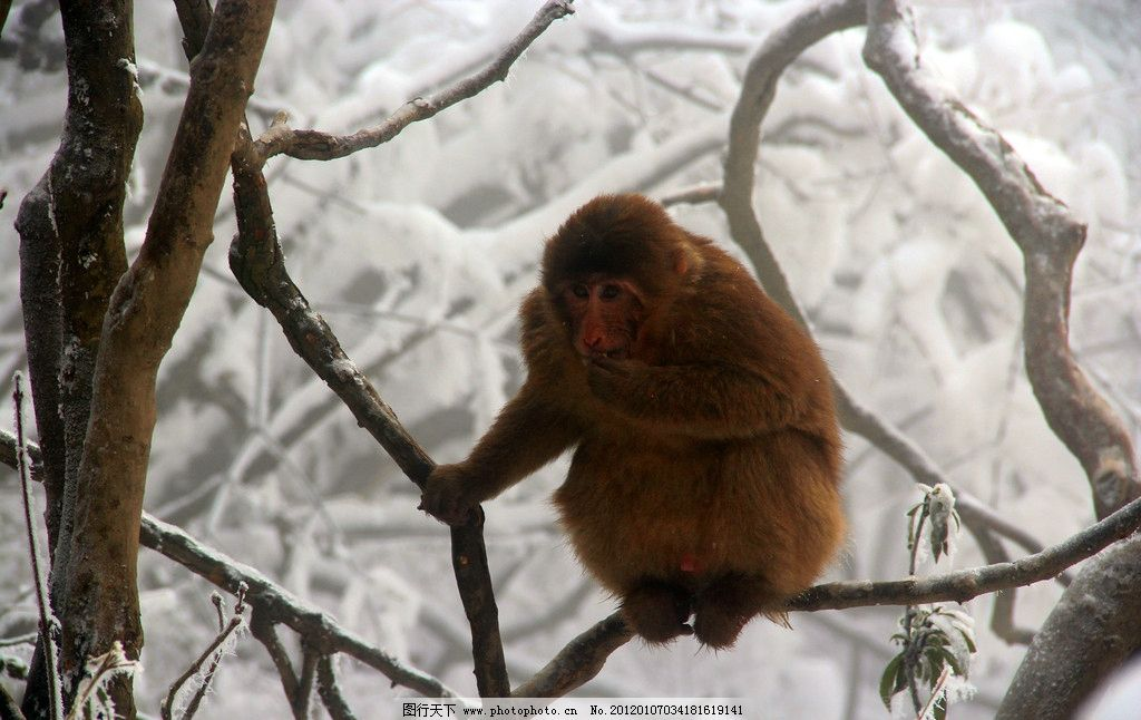 猴子 峨眉山 动物图片_自然风景_旅游摄影_图行天下