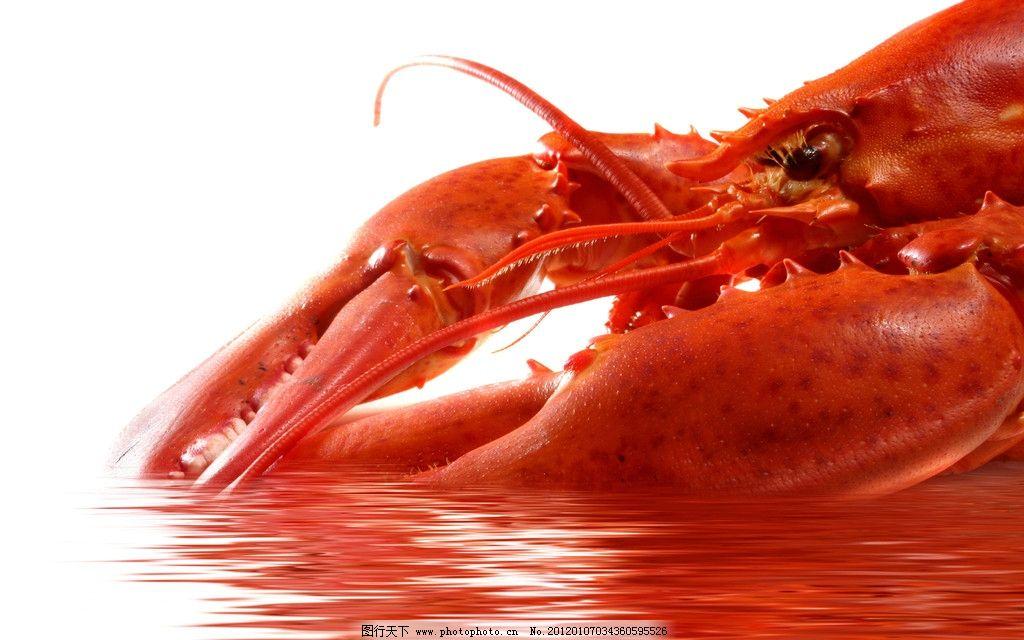 龙虾 大龙虾 野生 动物 海鲜 其他 生物世界 设计 300dpi jpg