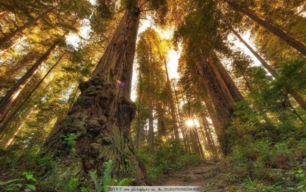 森林小路 绿树 泥路 草地 树林小道 太阳 曝光 阳光穿透树林 参天大树