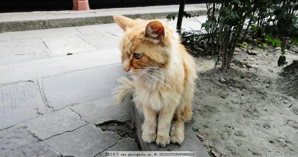 可爱的猫 小猫 虎纹猫 黄猫 毛茸茸 可爱 动物 宠物 猫科动物 小动物