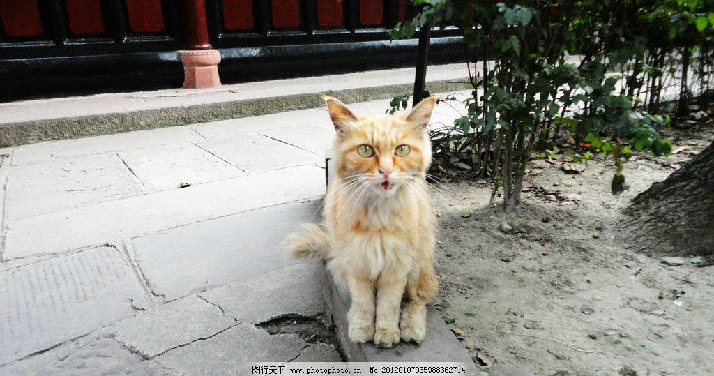 超萌动态 图片猫猫 小动物