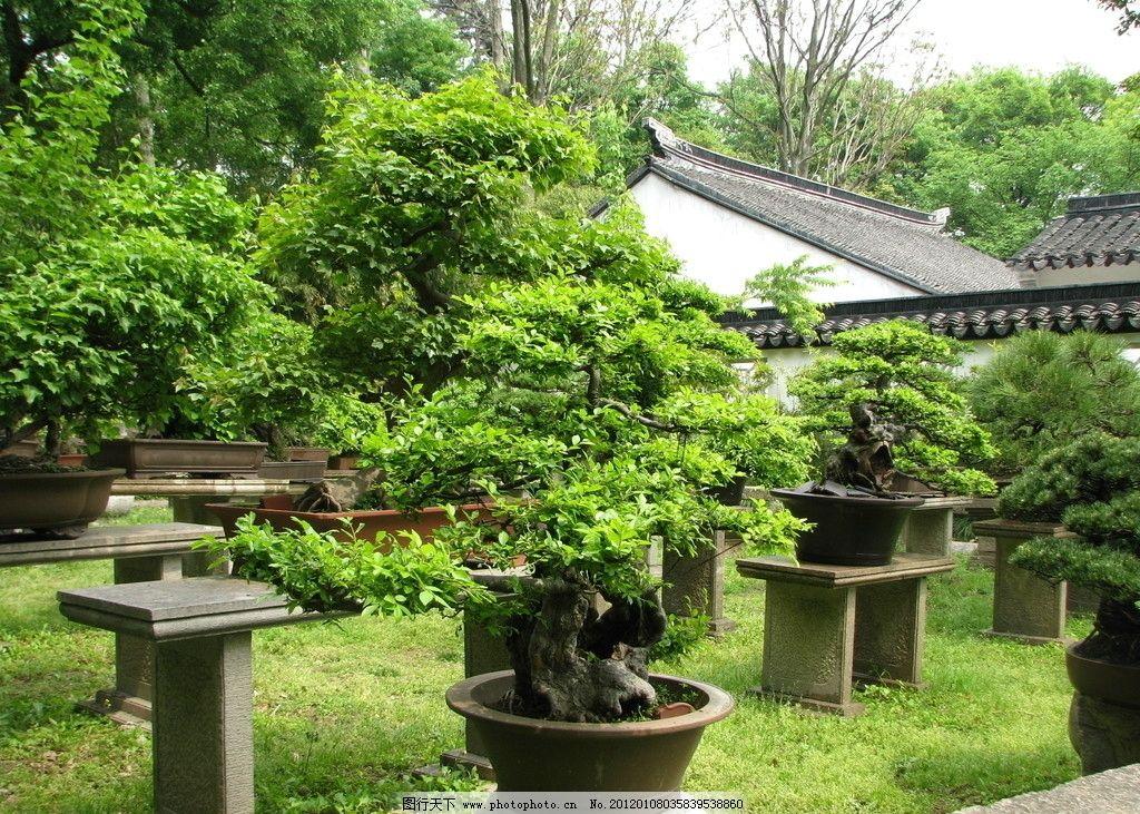 园林盆景 景观树 树木盆景 盆景艺术 绿色植物 园艺 公园盆景