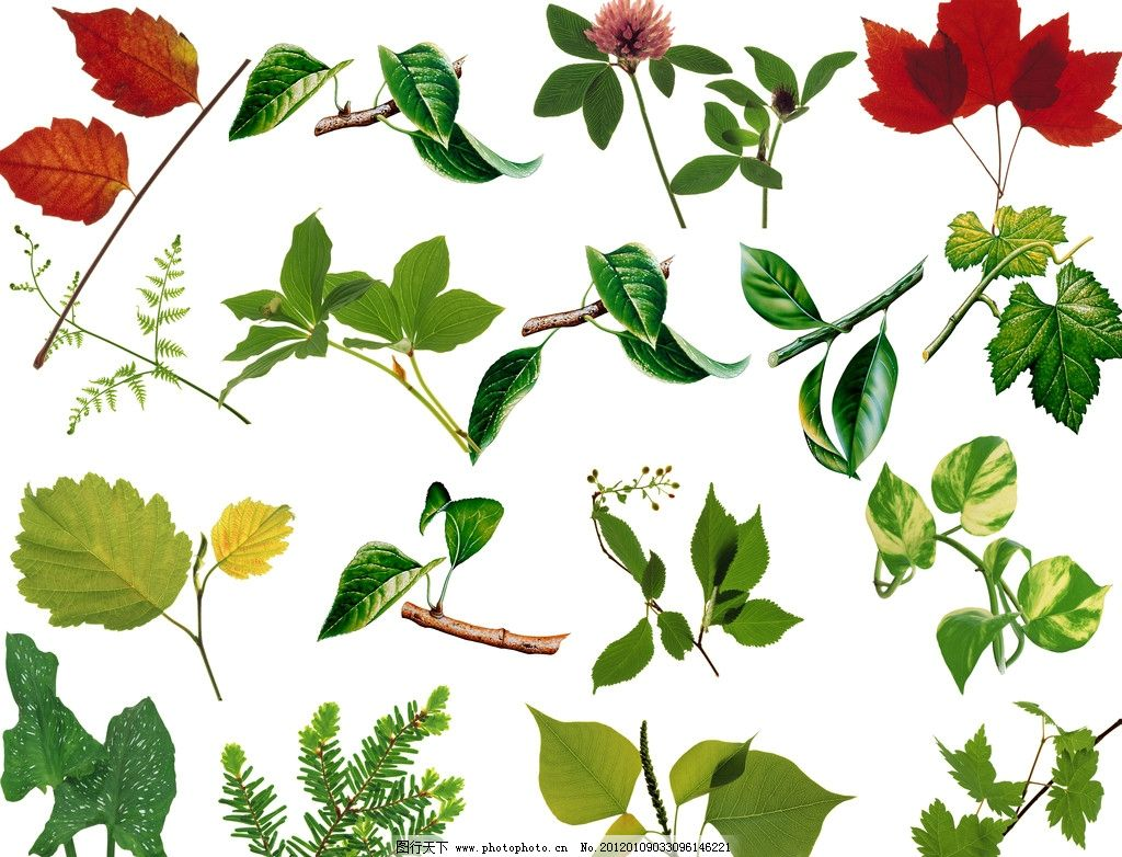 树叶 树枝 树木 枝叶 叶片 红树叶 嫩叶 红叶 植物 植物分层图 环境