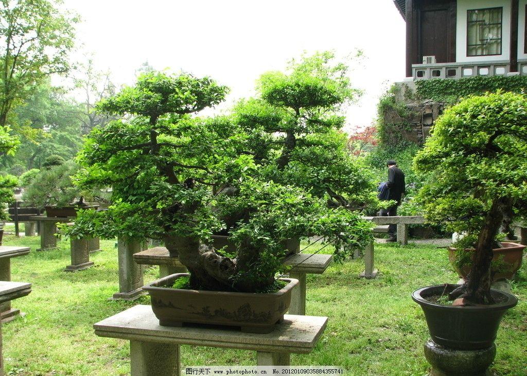 景观树 树木盆景 盆景艺术 绿色植物 园艺 公园盆景 柏树 修剪 树木树