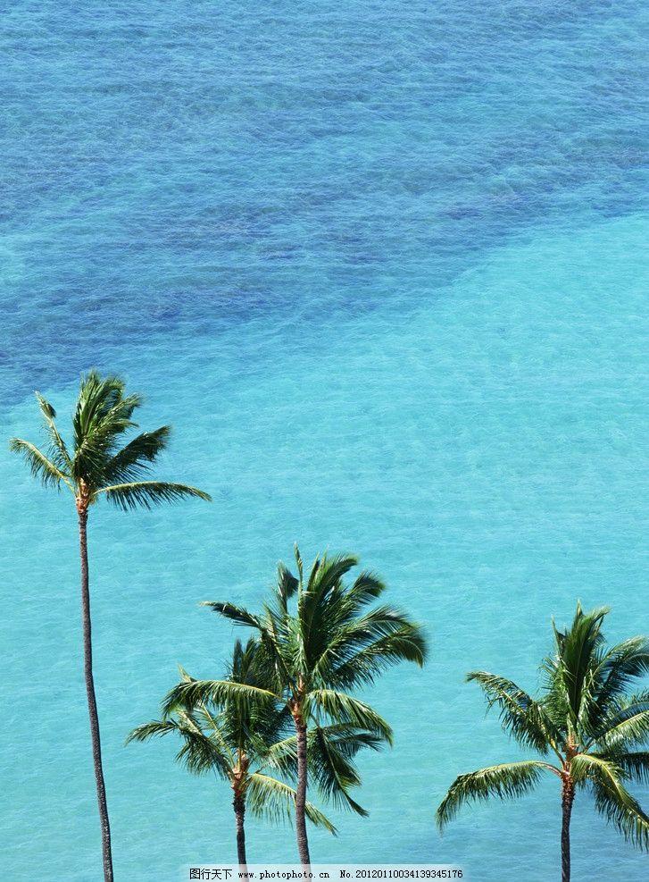椰树 海边 海边风景 海岸 海水 海景 大自然 美景 海边风光