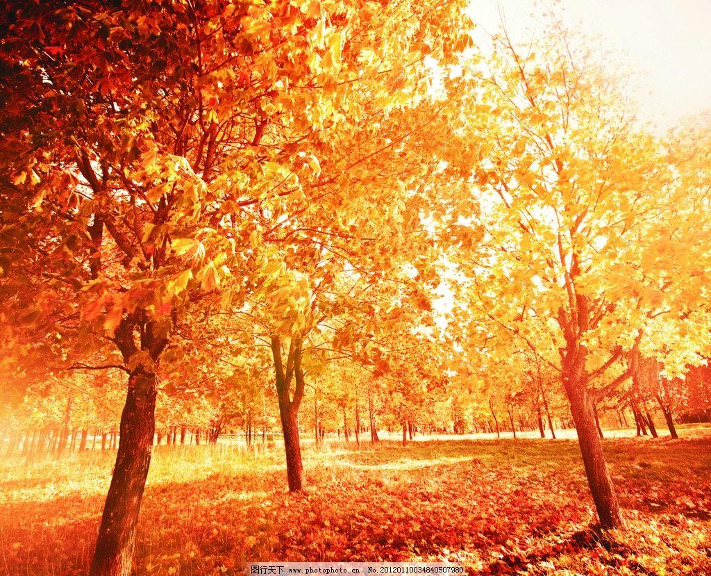 梦幻风景 树叶 黄树 秋天 移门 移门图案 摄影