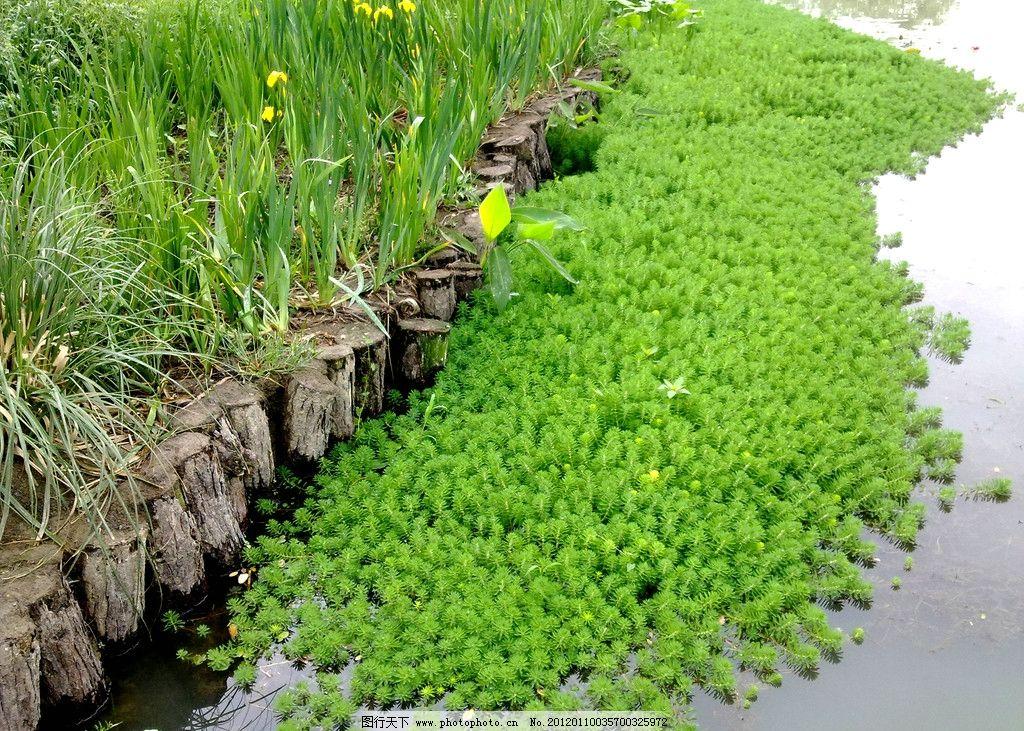 杭州西溪湿地 湖泊 视野 自然风景 五月景色 原生态 绿色 旅游 意境