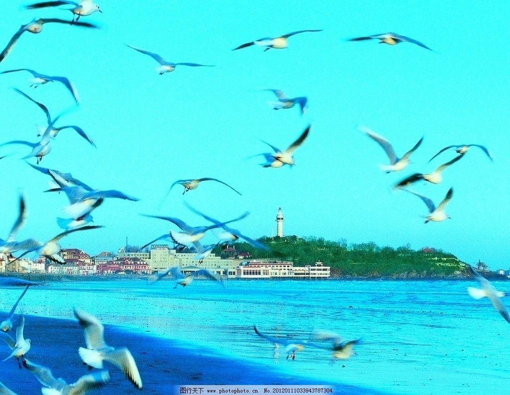 烟台山风光 灯塔 海鸥 海滨 风景 高清 国内旅游 旅游摄影 摄影