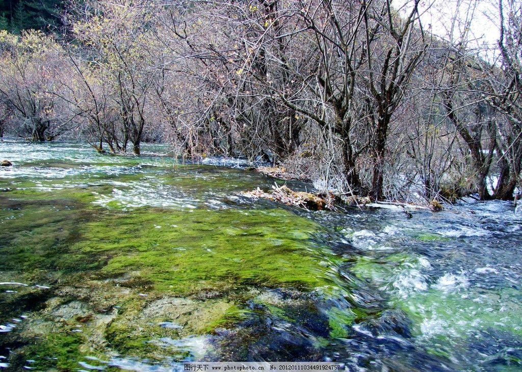 设计图库 自然景观 山水风景  九寨沟风光 九寨沟 湖水 青山绿水 大树
