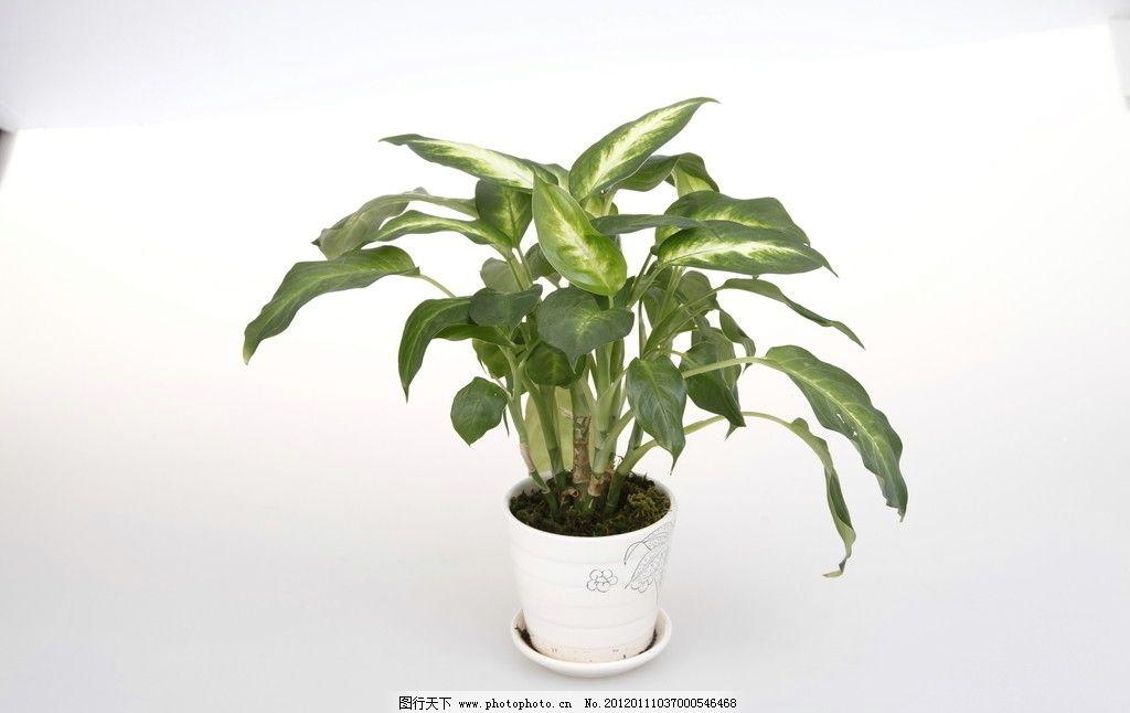 盆栽 高清室内盆栽植物 绿色 树叶 叶子 花盆 园艺 绿色植物 泥土
