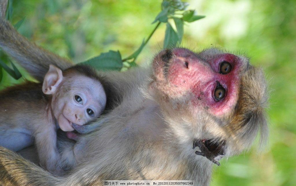 猴子 野生动物 生物世界 摄影