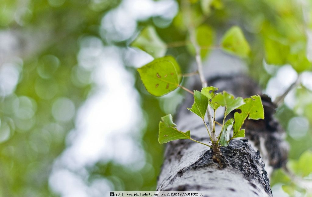 绿色树枝树叶摄影图图片