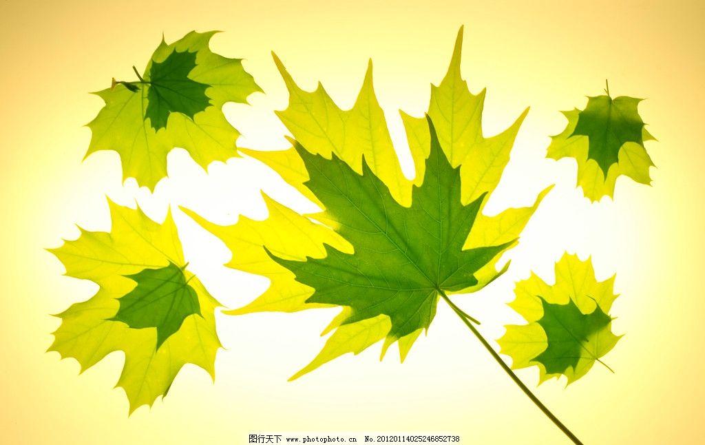 背景 壁纸 花 绿色 绿叶 树叶 植物 桌面 1024_646