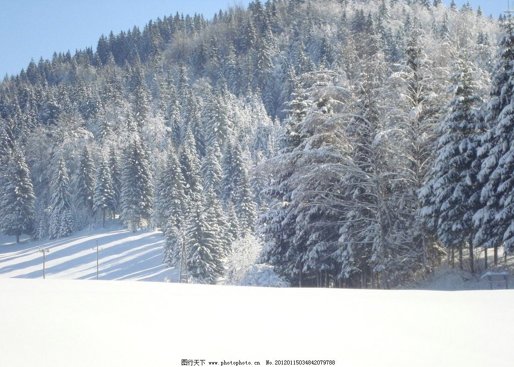 雪山松林 冰雪 冬天 雪 积雪 寒冷 植物 松树 树林 山坡 山脉 蓝天 白