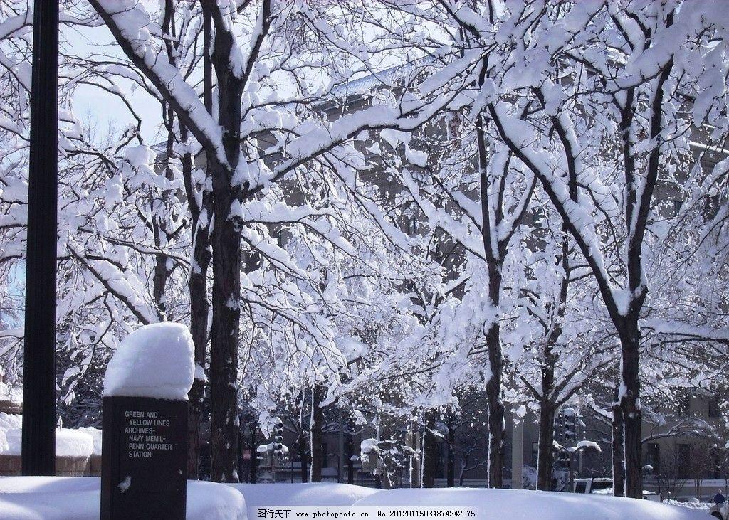寒冷 植物 树木 城市 公园 建筑 牌子 汽车 白色 雪世界 自然风景
