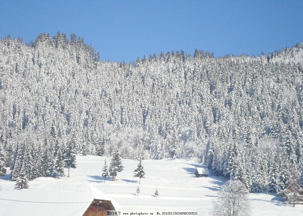 松树 树林 山坡 山脉 蓝天 房屋 别墅 白色 度假 雪世界 自然风景