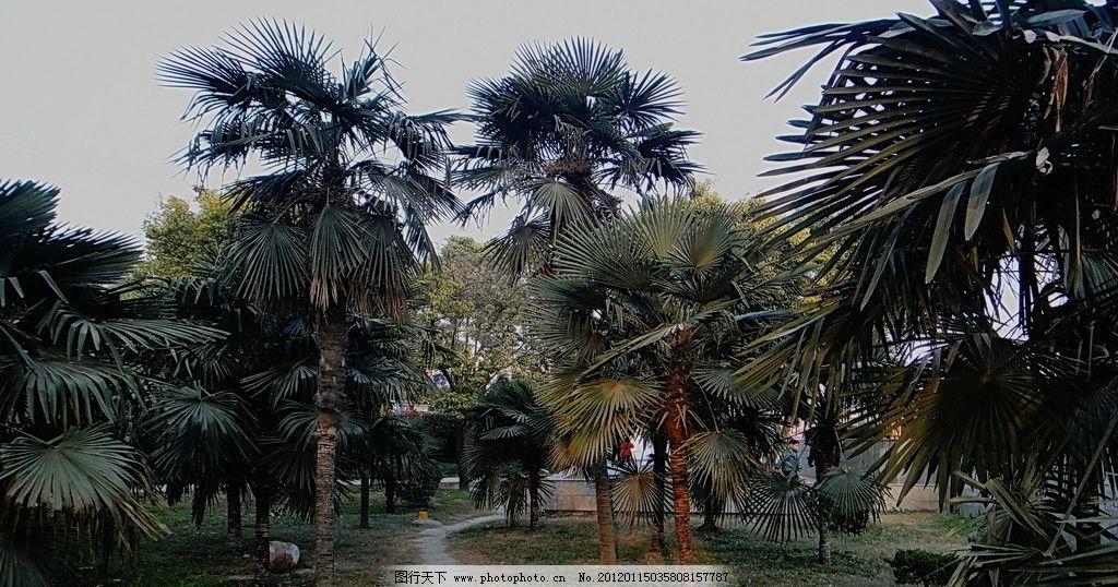 热带园林 树林 绿地 树木树叶 生物世界 摄影 72dpi jpg