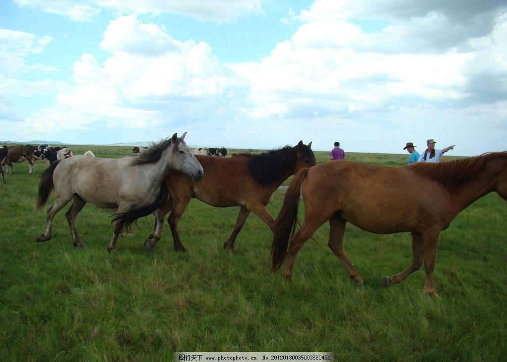 呼伦贝尔 大草原 马群 蓝天白云 野生动物 生物世界 摄影 72dpi jpg