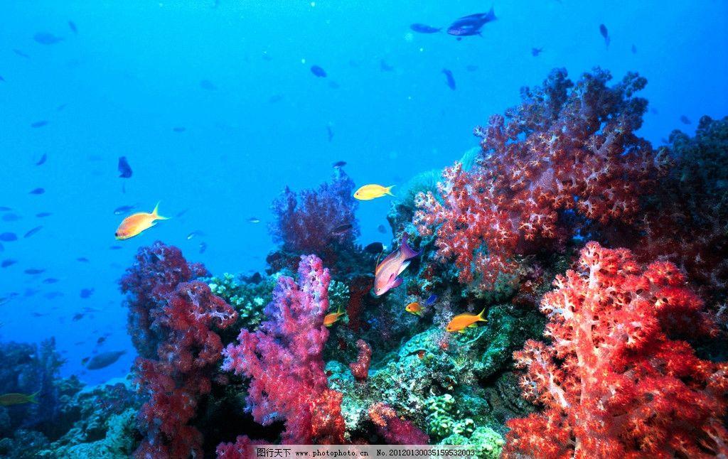绚丽海底世界 珊瑚 珊瑚礁 海葵 深海鱼 海底生物 海底世界 绚丽海底