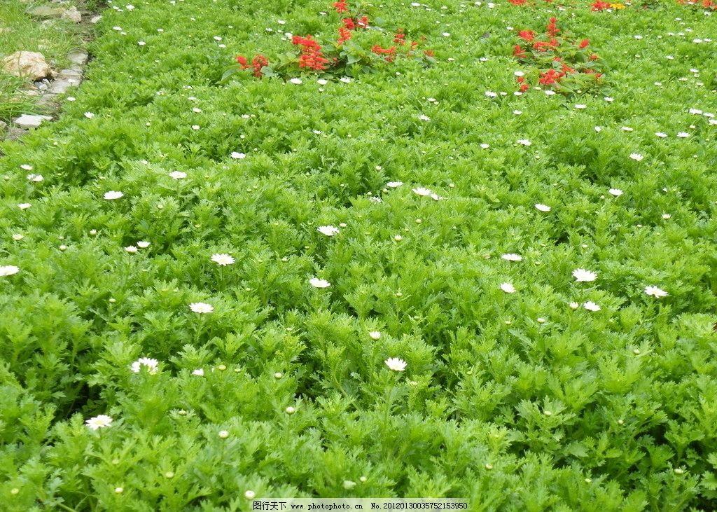 绿色花草图片图片