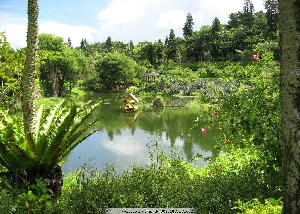 旅游 摄影图片 日本旅游 池塘植物 风景美图 水面 碧水 绿树