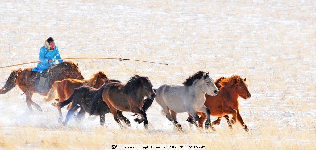 蒙古马图片