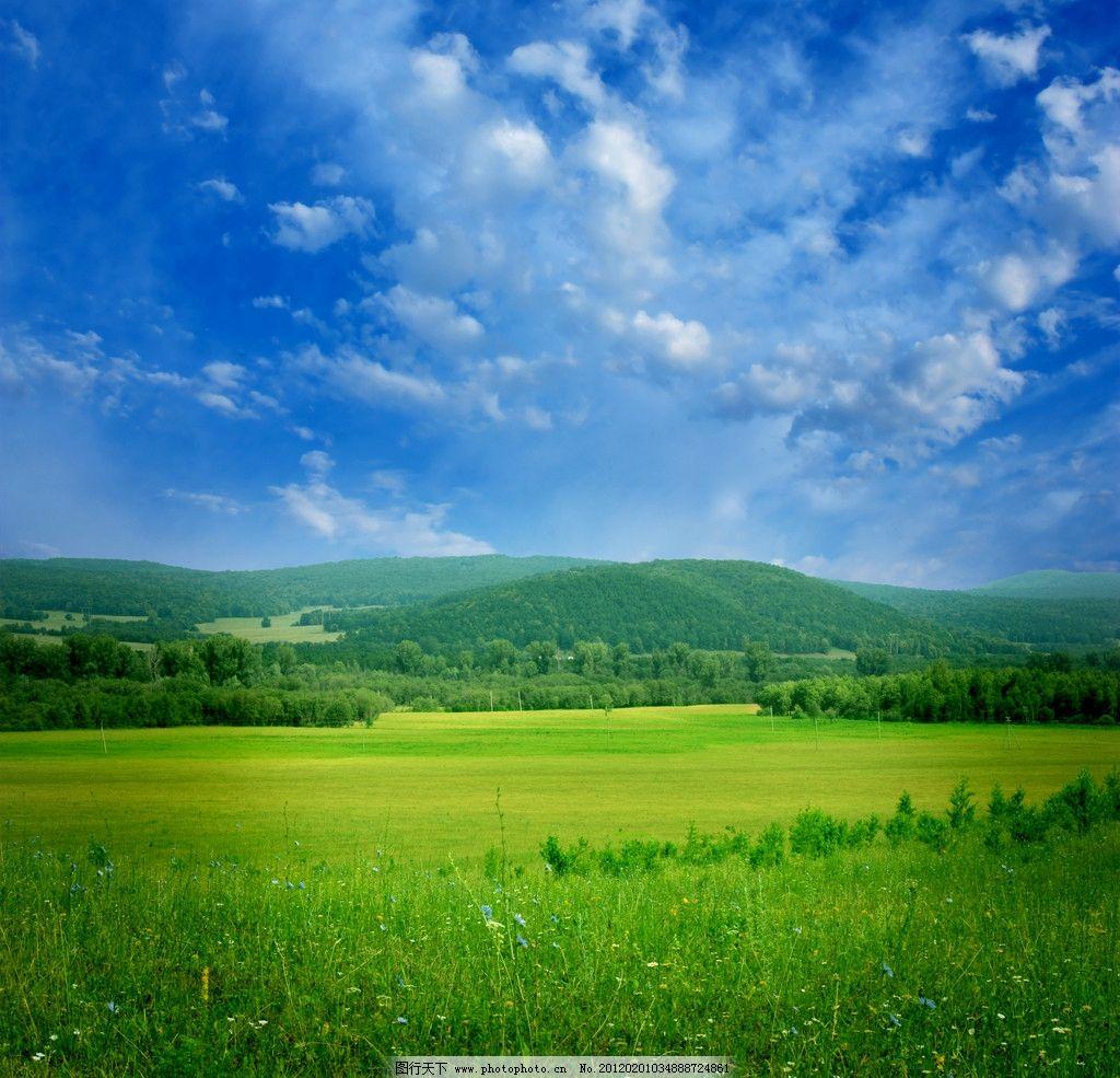 蓝天白云草地 蓝天 白云 阳光 草地 青草 花朵 鲜花 自然 美丽大自然
