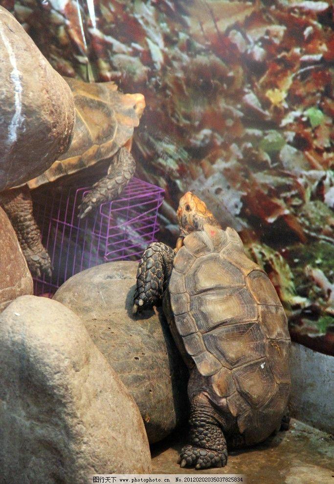 海龟 乌龟 动物 海洋动物 生物世界 野生动物 摄影