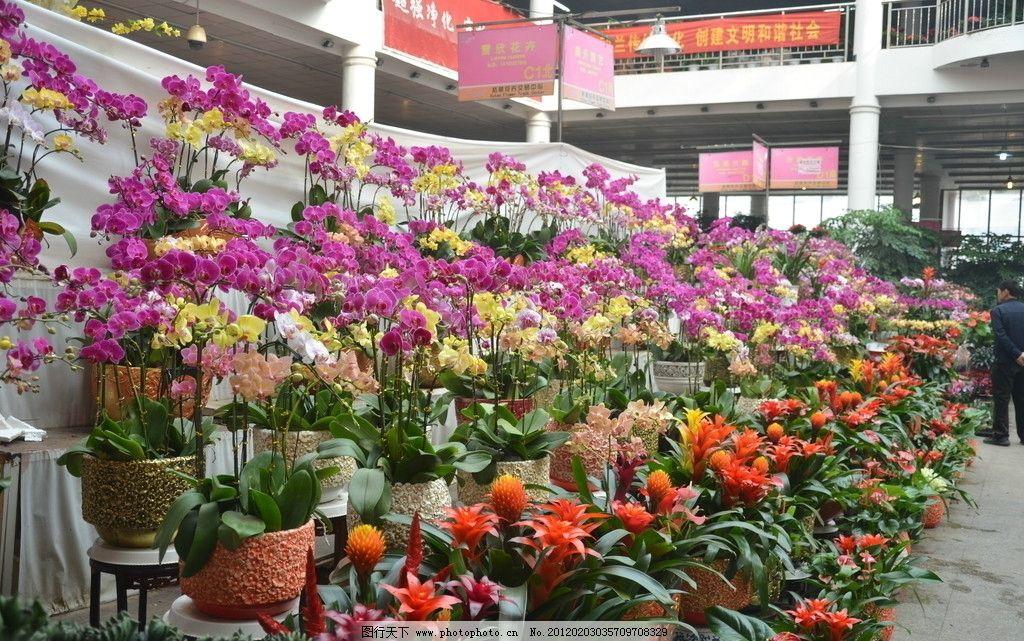 花卉市场一角图片