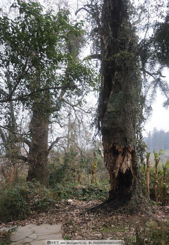 大自然 树 小路 枯树 大自然风景 摄影