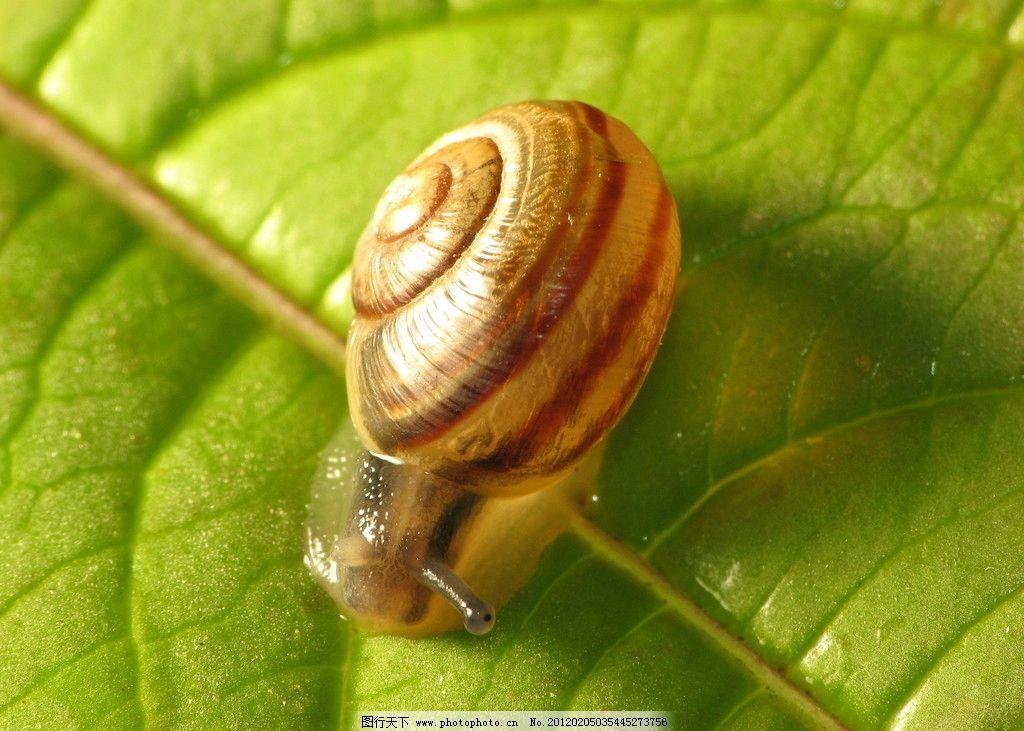蜗牛 动物 生物 大自然 野生动物 生命 软体动物 冷血动物 环境 环保