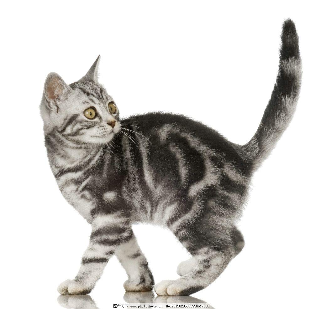 小猫 猫 猫咪 家猫 宠物猫 家畜 动物 各种猫 家禽家畜 生物世界 摄影
