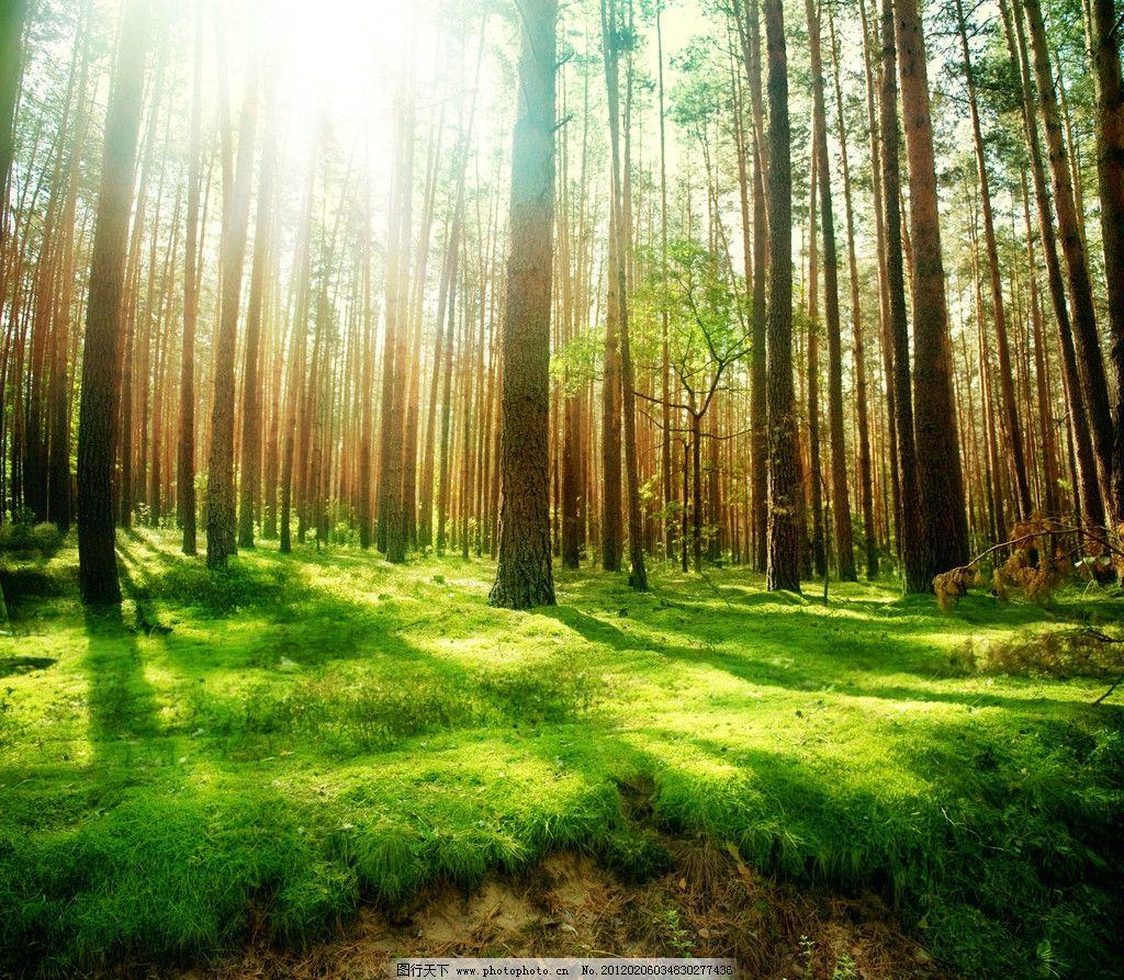 树林美景 公园树林 公园 园林 绿树 郁郁葱葱 树荫 植被 苔藓 绿草 光线 大树 树丛 树林 草地 草坪 绿地 道路 小道 路 生态公园 森林公园 树木树叶 生物世界 摄影 300DPI JPG 自然风景系列 自然风景 自然景观
