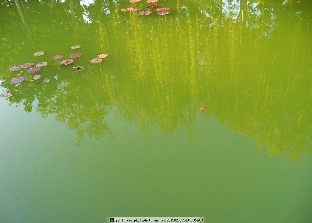 倒影 湖泊 公园 荷叶 柳树 春天 家乡自然风光 自然风景 自然景观