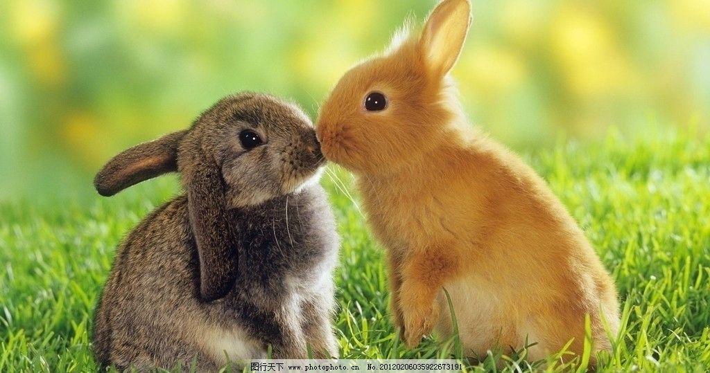 亲亲兔子简谱 图片合集