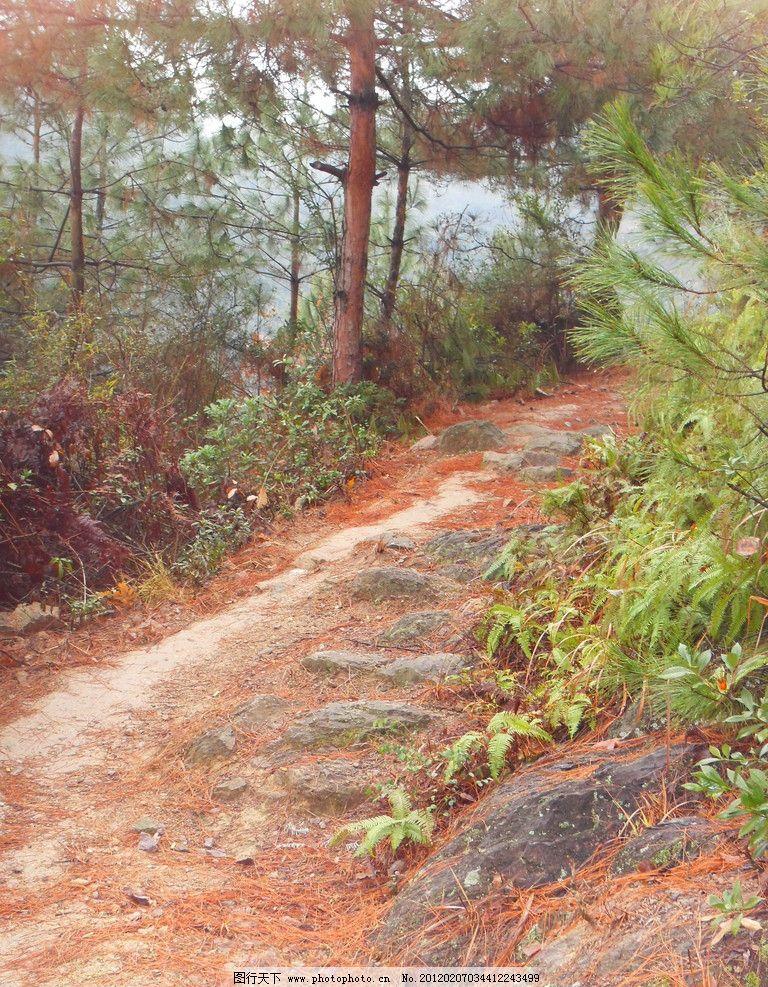 山间小道 山间 小道 松针 冬天 松树 小路 丽水 树林 山水风景 自然