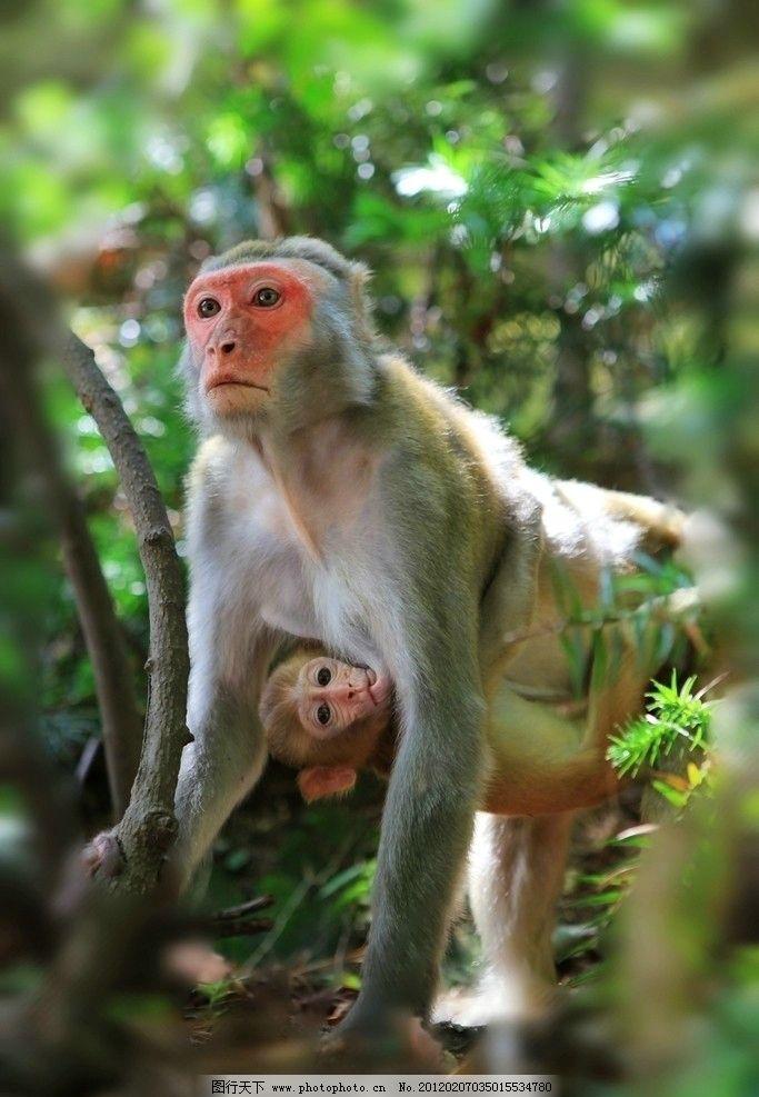 大猴 小猴 绿色 猴子亲情 猴脸 可爱 猴子 野生动物 生物世界 摄影 72