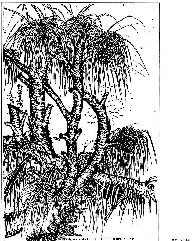野菠萝 钢笔画 风景画 插画 插图 树 菠萝 绘画书法 文化艺术 设计 72