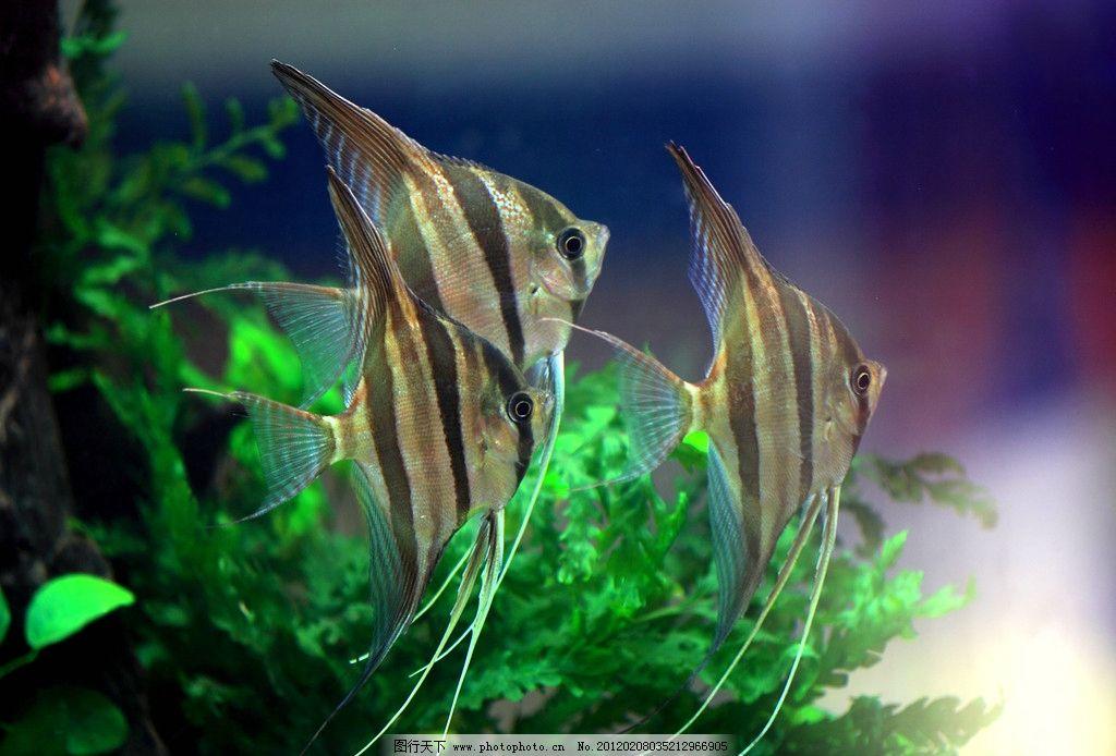 壁纸 动物 水草 水生植物 鱼 鱼类 1024_694