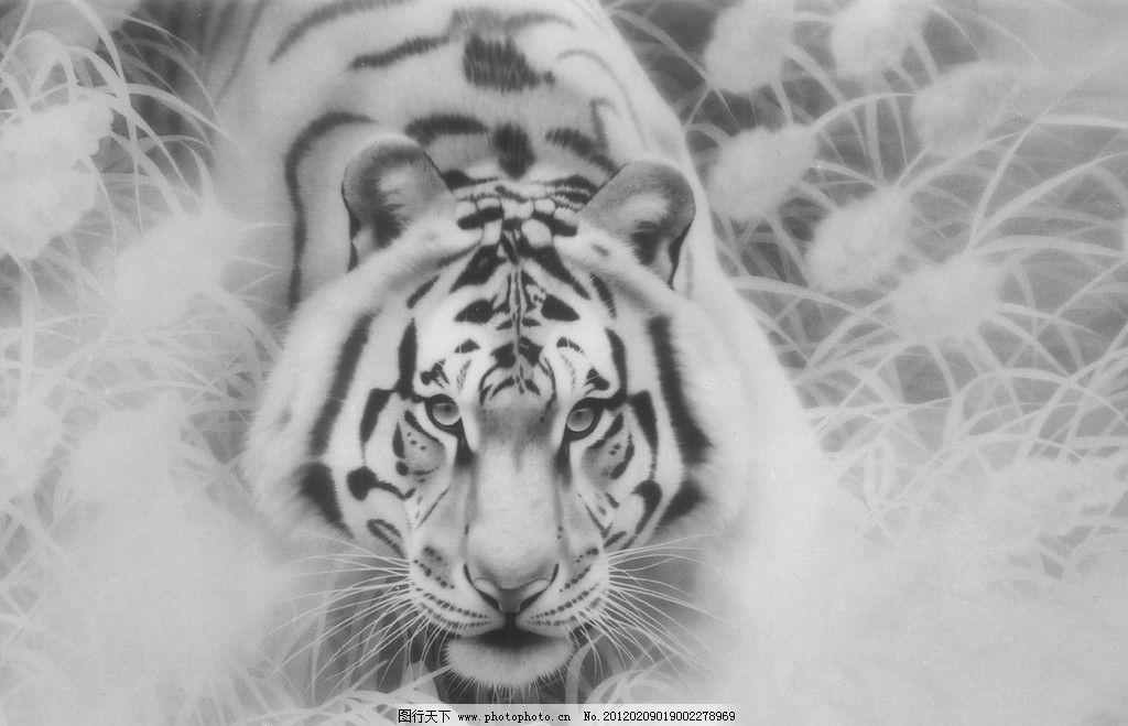 谢呈祥工笔画作品 艺术 绘画 老虎 动物 白虎 草 野草 绘画书法 文化