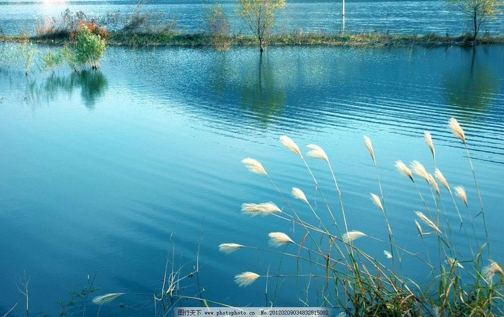 池塘 蓝色之魅 蓝色 水波 倒影 树木 芦苇花 风景 池塘水波倒影色彩
